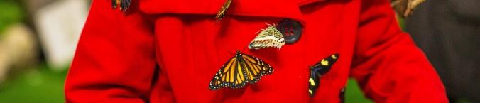 Butterflies2017.jpg